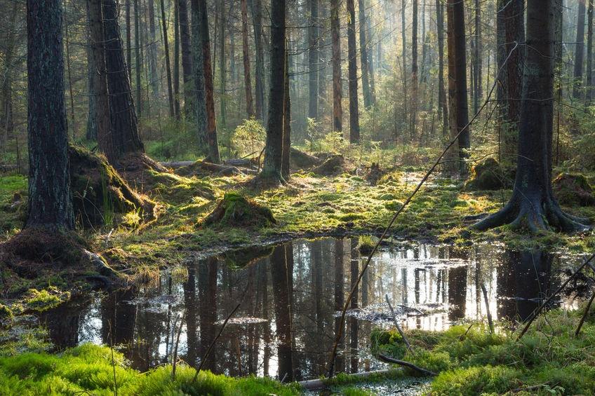 Самый древний лес на планете